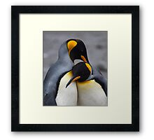 I Wuv You! (King Penguins, South Georgia) Framed Print