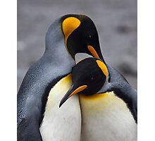 I Wuv You! (King Penguins, South Georgia) Photographic Print