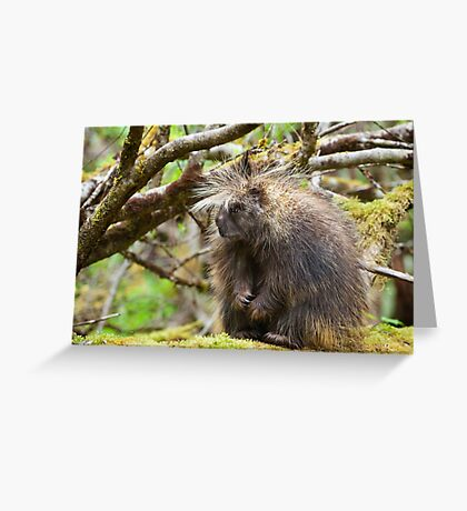 Trend Setters Greeting Card