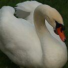 Swan by Kitsune Arts