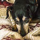 Major on his blanket by Bryan D. Spellman
