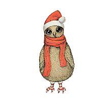Christmas Owl Photographic Print