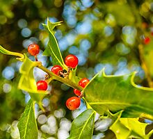 Holly, berries & bokeh by Glaspark