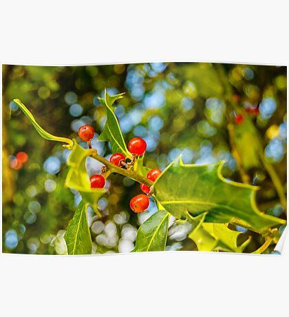 Holly, berries & bokeh Poster