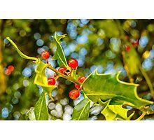 Holly, berries & bokeh Photographic Print