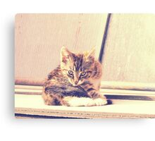 Retro Kitten Photo 3 Canvas Print