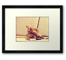 Retro Kitten Photo 4 Framed Print