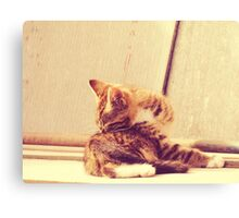 Retro Kitten Photo 4 Canvas Print