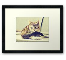 Retro Kitten Photo 5 Framed Print