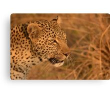 Leopard on the hunt Canvas Print