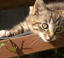 Striped kitten by AnnArtshock
