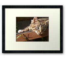 Striped kitten Framed Print