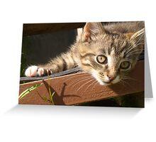 Striped kitten Greeting Card