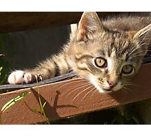 Striped kitten Photographic Print