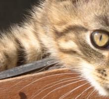 Striped kitten Sticker