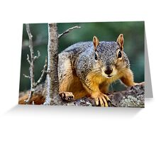 I work for peanuts!  :) Greeting Card