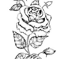 Black and white hand drawn rose by Eugenia Hauss