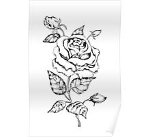 Black and white hand drawn rose Poster