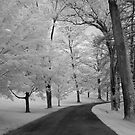 Tree Lined Path by Colleen Drew