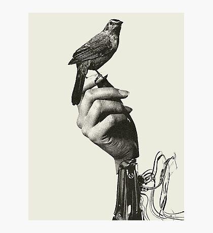 Westworld Bird Photographic Print