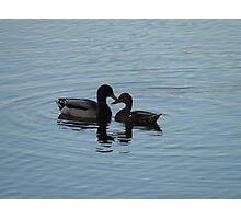 Love Ducks Photographic Print