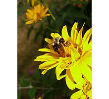 Bee on Yellow Flower Photographic Print