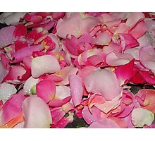 Rain Drops on Rose Petals Photographic Print