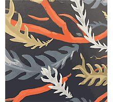 Banksia pattern Photographic Print