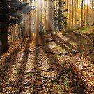 Morning Glory by Gene Praag