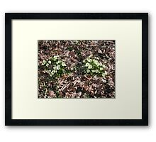 "BY THOMAS AND FRIENDS GROUP ""ALL THINGS TWINS""  and 'spring girls wake up ....VETRINA RB EXPLORE GIUGNO 2014. Framed Print"