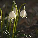 Spring Snowflake by cclaude