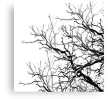 Tree Limbs 2 Black and White Canvas Print