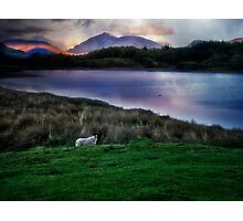 Sheep at sunset - Scotland Photographic Print
