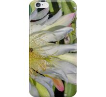 Night Blooming Cereus Cactus iPhone Case/Skin