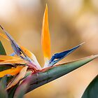 Bird of Paradise by Donna Adamski