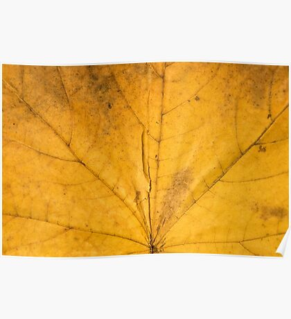 Single yellow maple leaf. Autumn texture Poster