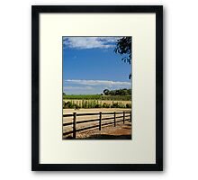 The Vineyard On The Hill Framed Print