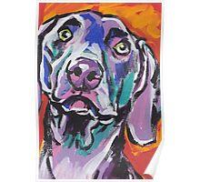 Weimaraner Dog Bright colorful pop dog art Poster