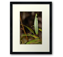 Autumn Willow Framed Print