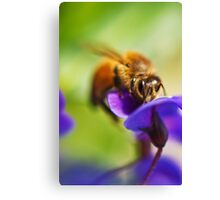 South Beach Bee Canvas Print