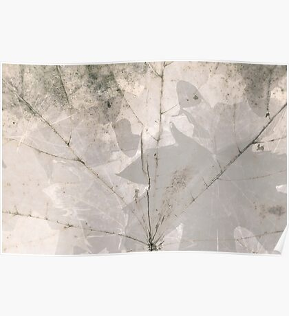 White leaf texture. Maple leave. Modern nature texture Poster