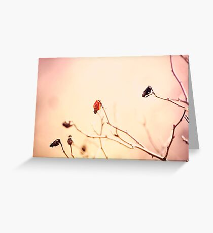 Dried rose fruits on twigs. Nature texture. Soft pastel colors: beige and pink Greeting Card