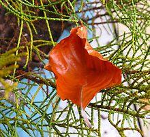 A Fallen Sycamore Leaf by Kathryn Jones