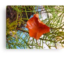 A Fallen Sycamore Leaf Canvas Print