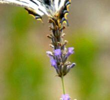 Mariposa en flor Sticker