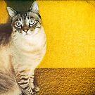 Tabby cat by Silvia Ganora