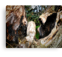 Laughing Trees/Fighting Bears Canvas Print
