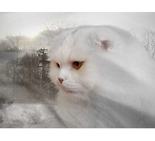 Soft and white like snow with a drop of golden sun Photographic Print