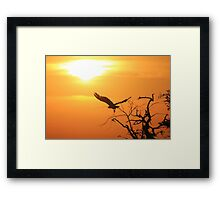 White-backed Vulture - Flying into the Sun. Framed Print