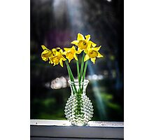 Daffodil Bouquet  Photographic Print